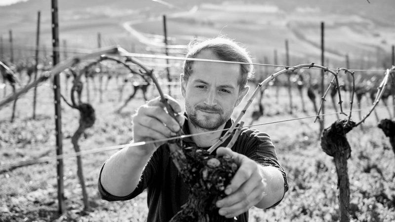 Lukas Bicking Weingut Bicking&Bicking Wein Event Laubarbeiten